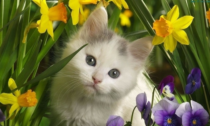 Cute Funny Cat Picturesfunny Catcute Catfunny And