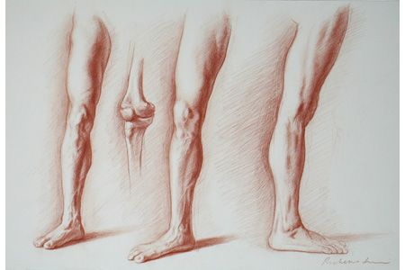 Start with a limb legs to understand anatomy when drawing the human body. | #figuredrawing #drawingtips
