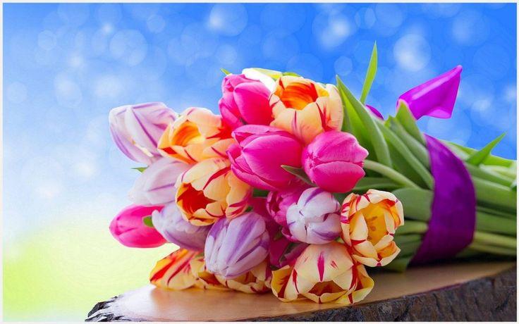 Colorful Tulips Wallpaper | colorful tulips wallpapers