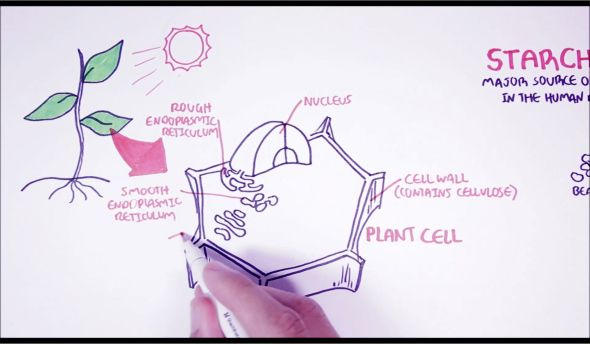 Plants eat sun, plants make giant cell. Simple. Or is it? :)