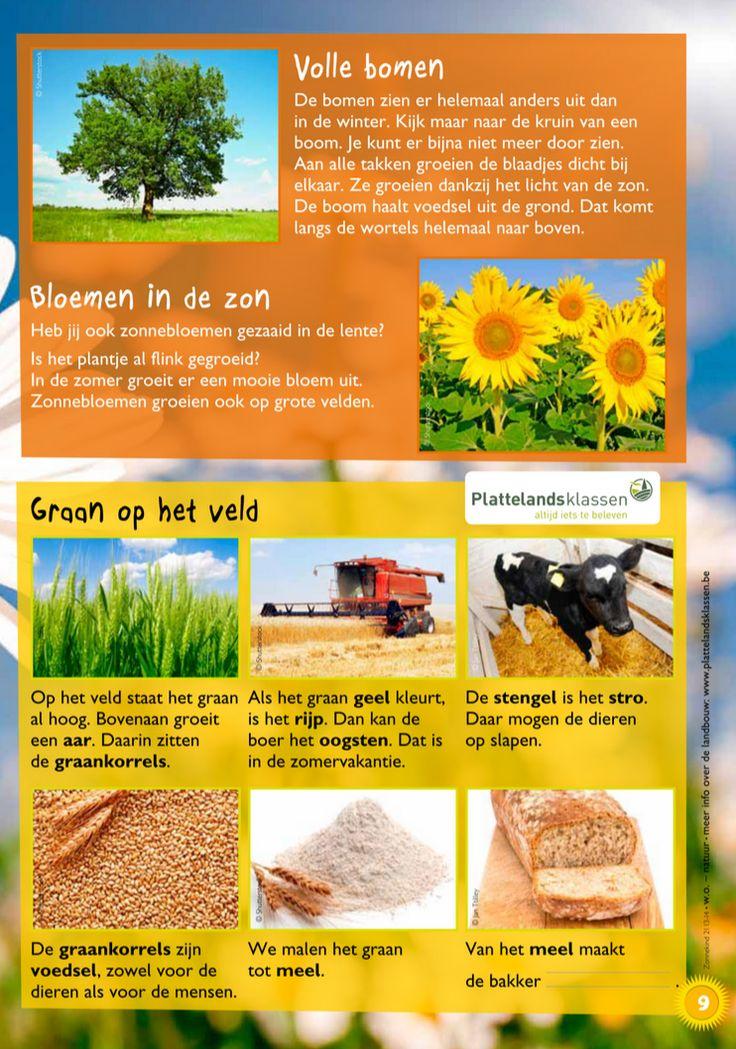 Wat doen de planten in de zomer? 2 @keireeen