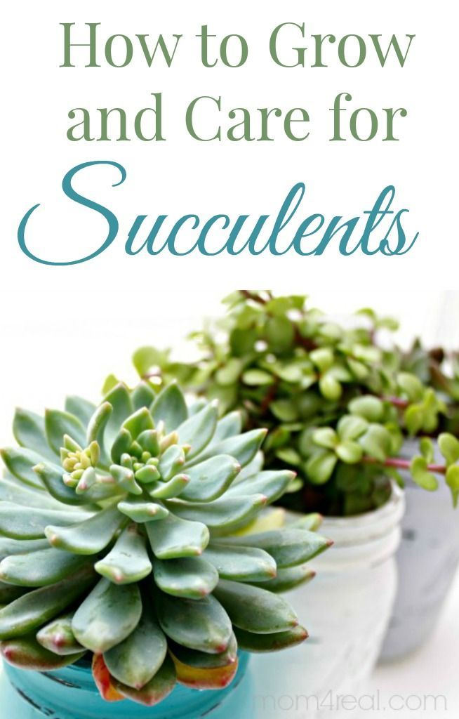 Planning on starting a succulent garden. Here's how to grow and care for them