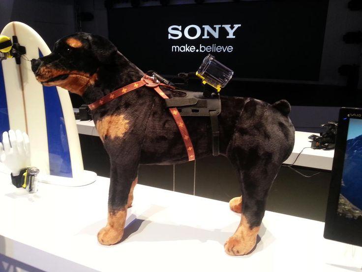 El ActionCam es perfecto para poder ver todo desde el punto de vista de tu mascota! http://#SonyLatinCES