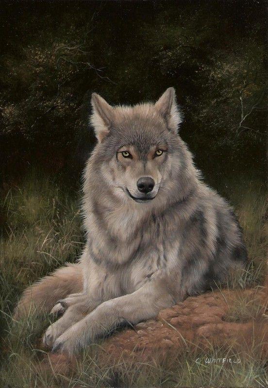 Avoir un chien loup