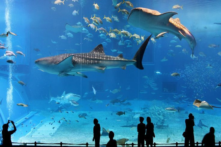 "Osaka Aquarium (Kaiyukan) OSAKA - The biggest AQUARIUM in the world: AKA ""KAIYUKAN"" in OSAKA 1 HR. S.W. OF KYOTO 10-8 PM 2,300 YEN http://www.japan-guide.com/e/e4004.html"