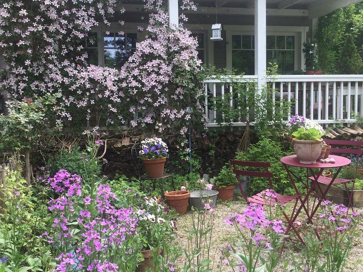 Cottage-Garten-Pflanzen für Faule. Hier stelle ic…