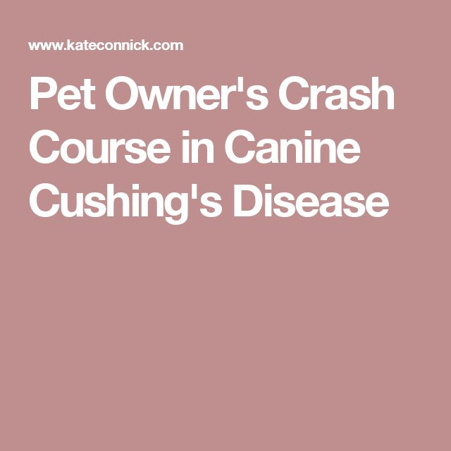Pet Owner S Crash Course In Canine Cushing S Disease Cushing Disease Mast Cell Tumor Dogs Dog Cancer