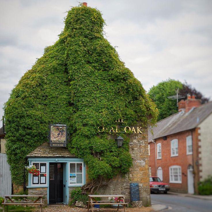 "487 gilla-markeringar, 17 kommentarer - @hope_and_wander på Instagram: ""The Royal Oak Pub at Cerne Abbas built in 1540. 🍺🍻It looks like that massive and beautiful vine has…"""