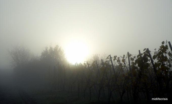 Novembersonne am Morgen