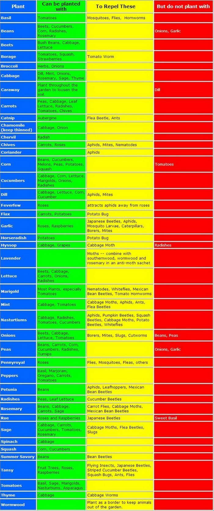 San Antonio Planting Calendar & Companion Planting Guide | SustainableSA.com