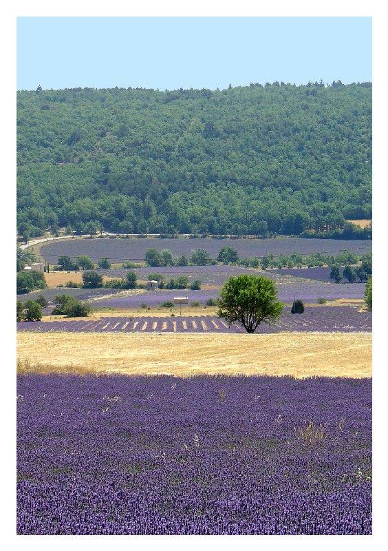 Lavande - Sault, Provence-Alpes-Côte-d'Azur