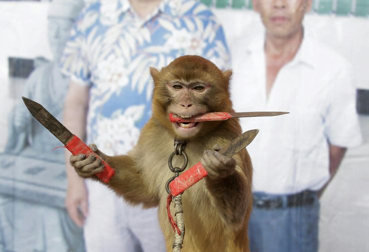 Monkey with 3 knives rpics stock market year of the