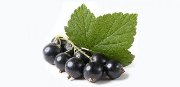 Листья смородины — польза и полезные свойства листьев смородины