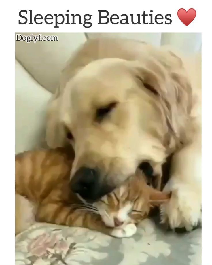 Dont Worry He Didnt Hurt The Kitty Didnt Dont Hurt Kitty Worry Check More At Http Tier Sitzpin Mit Bildern Niedliche Tierbabys Susseste Haustiere Lustige Tiere