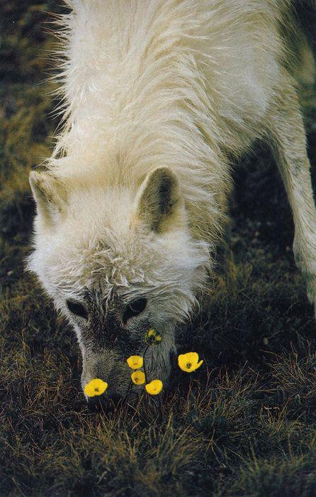 Fragrant flowers for smelling.