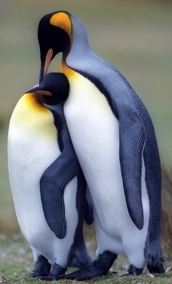 Emperor penguins via www.Facebook/OurWorldsView