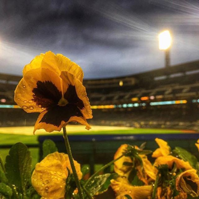 Spring has sprung at @pnc_park #mlb #pirates #baseball #flowers #spring #wpxi : Scott Dobson