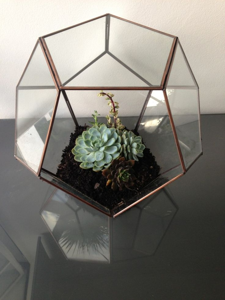 How to make your own plant terrarium | Interior Addict