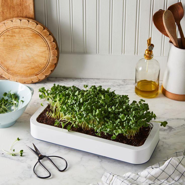 Countertop Microgreen Grower Aquaponics diy, Microgreens