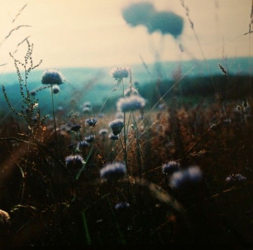 : Stay Focus, Dream, Color, Gods Love, Flower Bombs, Blue Flower, Gods Is, Fields, Real Love Quotes