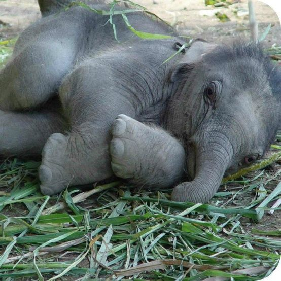 This baby elephant is so stinkin' cute!