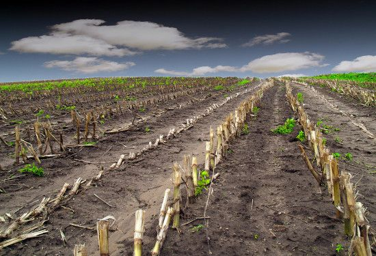 Acreage of GMO corn crops have doubled in the last ten years, according to USDA data.