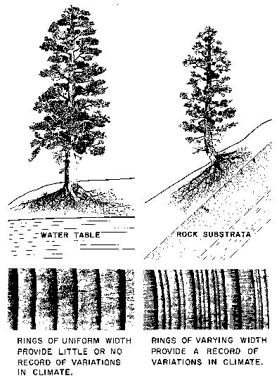 tree ring dating archaeology tools