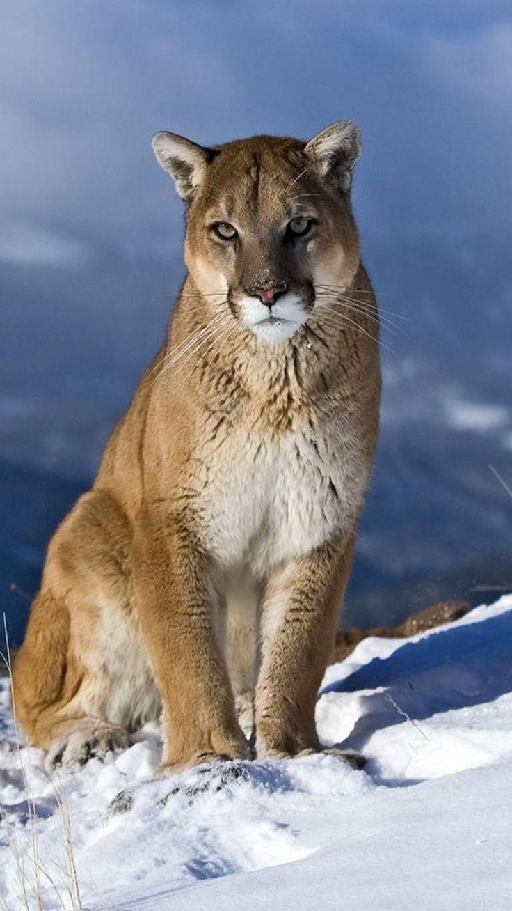 de leon cougars personals 2 rue de la gare 80430 beaucamps-le-vieux france madrid, spain las mercedes business park, building 4 avenida de aragon 330, 28022 madrid spain .