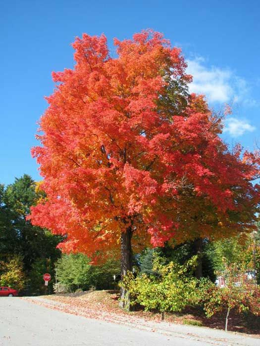 Nothing is more beautiful than the fall in Maine!    Augusta, #Maine