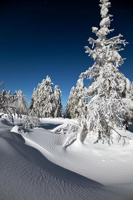 Winter landscape by noomrise, via Flickr