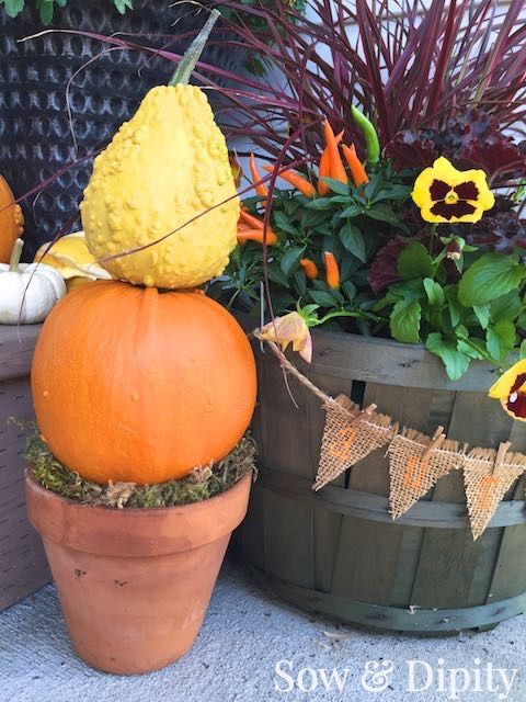 Level-up your fall decorating game by using gourds as planters, either stuffed in a basket or spilling out of a bucket. Click-in for these creative ideas from Sow & Dipity.