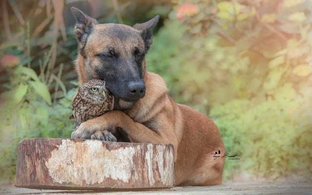 ❤️Un photographe trouve une chouette couchée à côté d'un chien… lorsqu'il découvre la vérité, il fait ceci ! – TFI