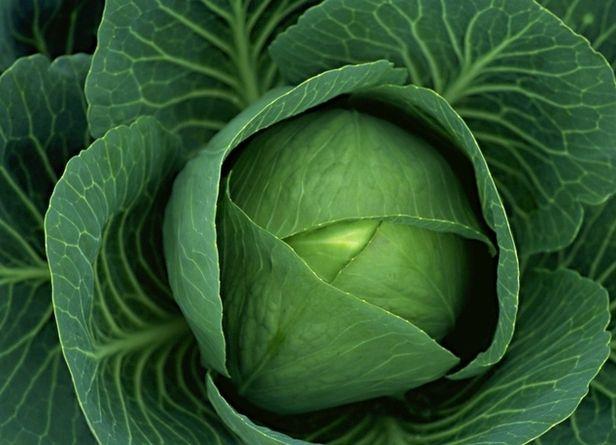 Несмотря на то, что капусту можно найти на каждом огороде, выращивать ее умеют далеко не все.