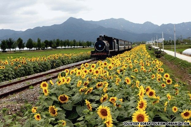 Seomjin River Train Village (섬진강 기차마을)