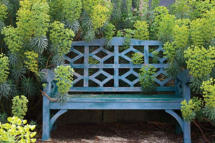 Beautiful blue bench juxtaposed in the plants