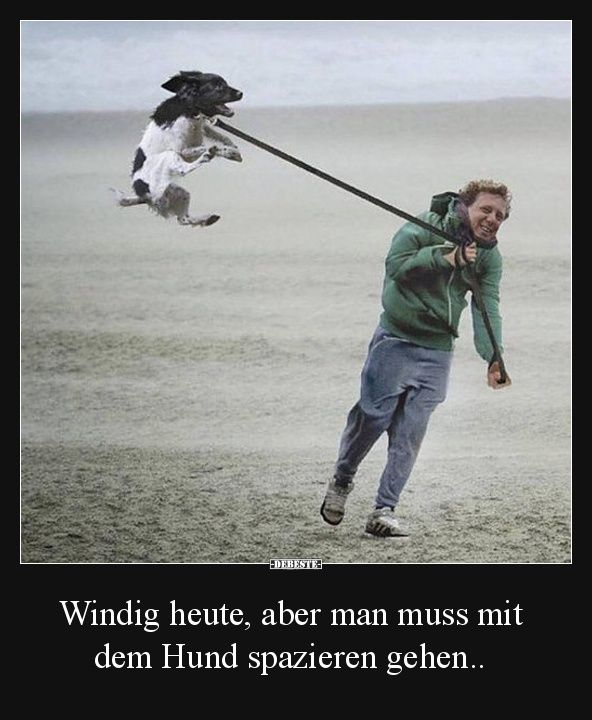 Windig heute, aber man muss mit dem Hund spazieren gehen.. | Lustige Bilder, Sprüche, Witze, echt lustig