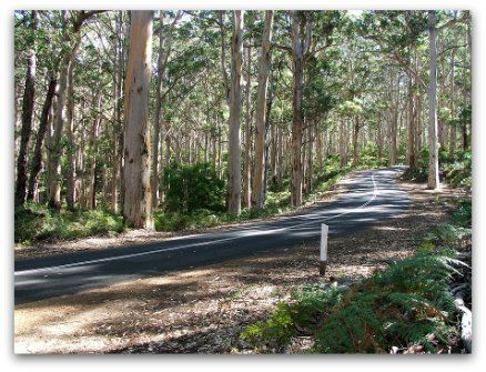 road trip planner on australia country bush drive