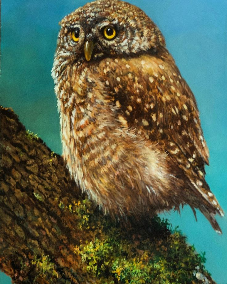 Steenuil, olieverf schilderij van  Lion Arie Feijen