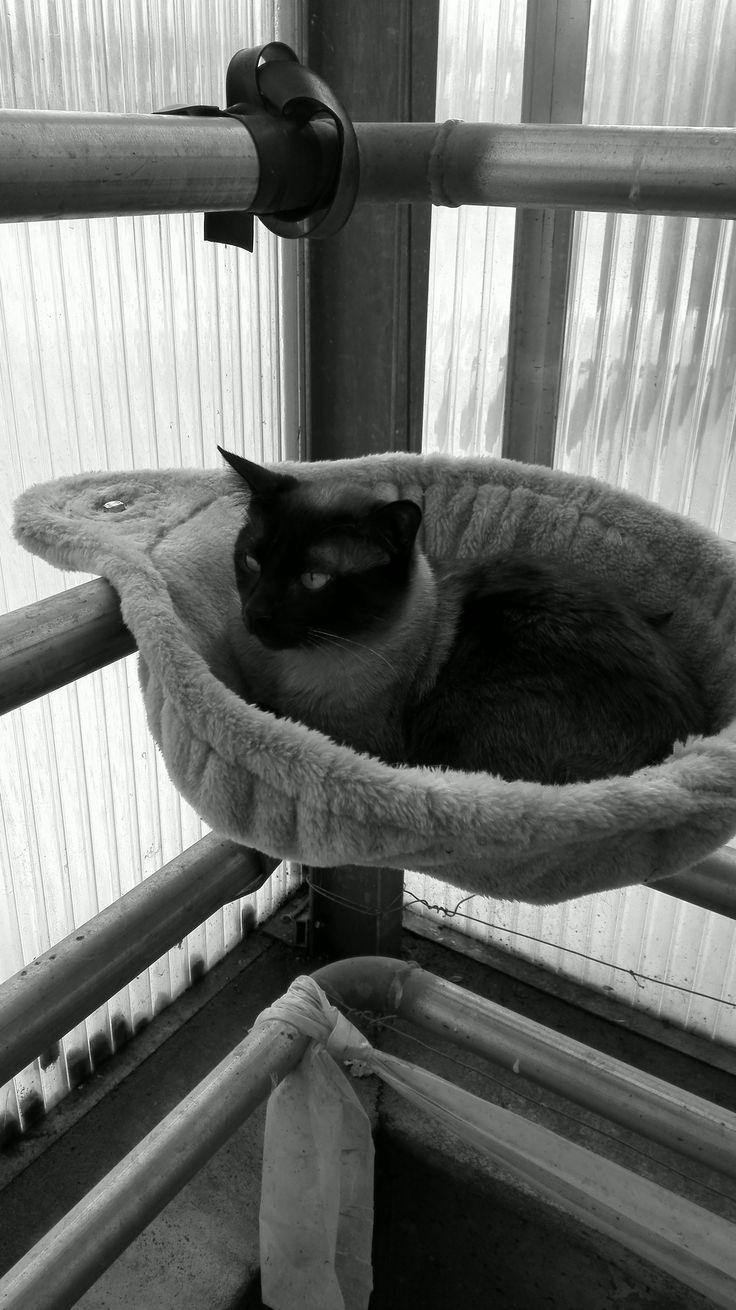 My cat  Morris