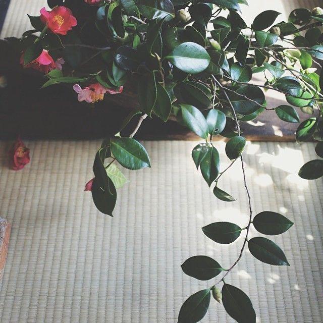 京都 花屋 みたて