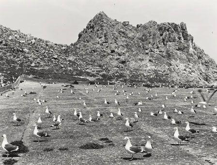 New released photographic book:  #GullJuju by Lukas Felzmann