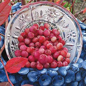 Grow Your Own 'Pink Lemonade' Blueberry