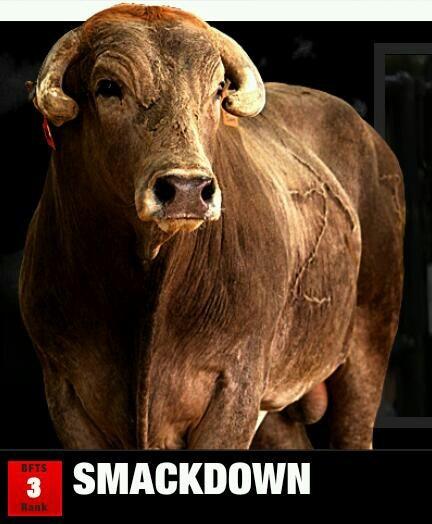 Smackdown Bull Id Ygk55 Contractor Dakota Rodeo Chad