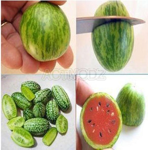 10 x Rare Super Small Mini Thumb Watermelon Seed Fruit Balcony Plant Garden New in Seeds & Bulbs   eBay