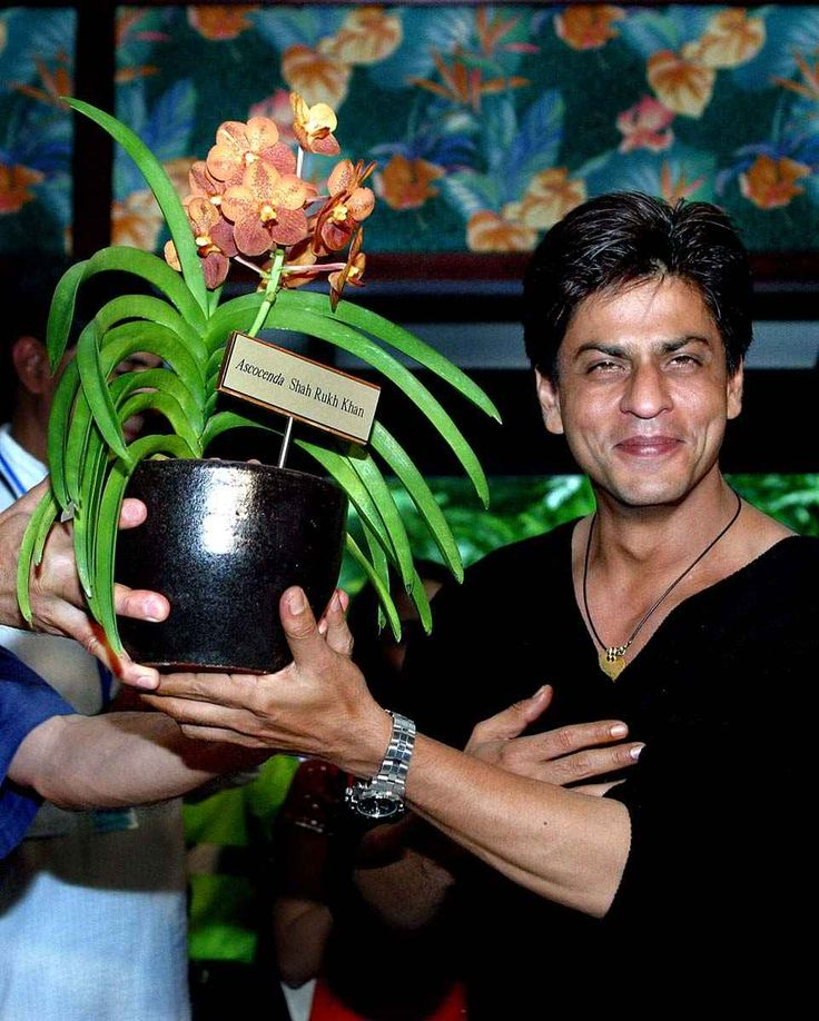 There's a rare species of an orchid which was named after Shah Rukh Khan by the Singapore government in 2003! RT pic.twitter.com/86cIGAYfY
