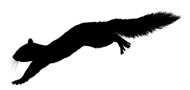 Leaping Squirrel Silhouette by kintired, via Flickr