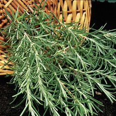 Herbs such as sage, thyme and rosemary are ideal for sandy soils | plants for soil types