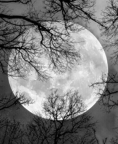 Black and white foto of moon with trees at night
