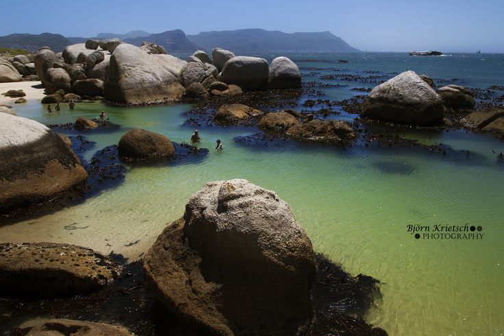 South Africa's penguin colony at Boulder's Beach in Simons Town.