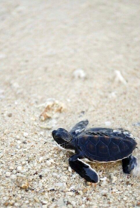 Želva mořská